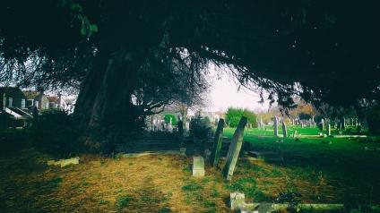 yewtree